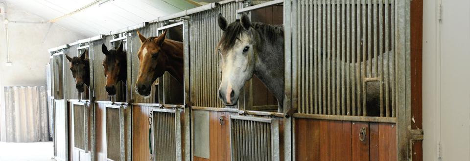 paarden vakantie