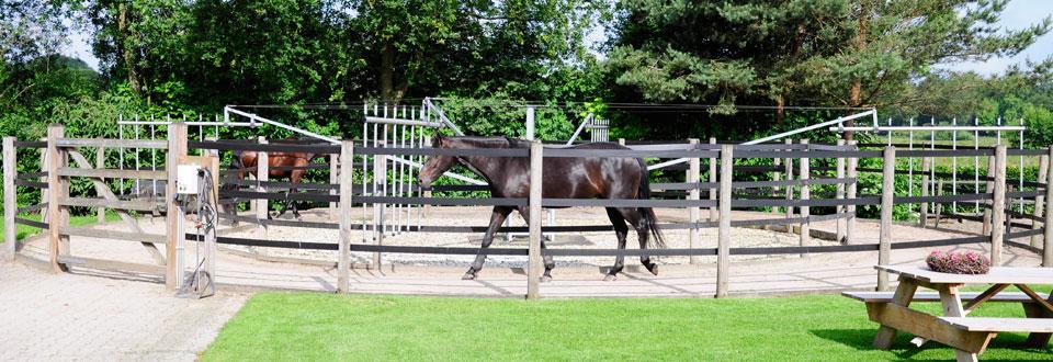 paardenvakantie Epe